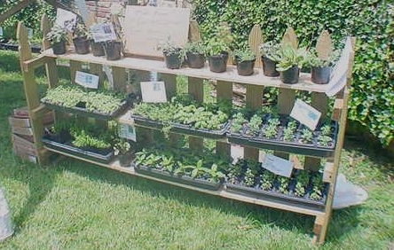 Lists of herb plants available end of April